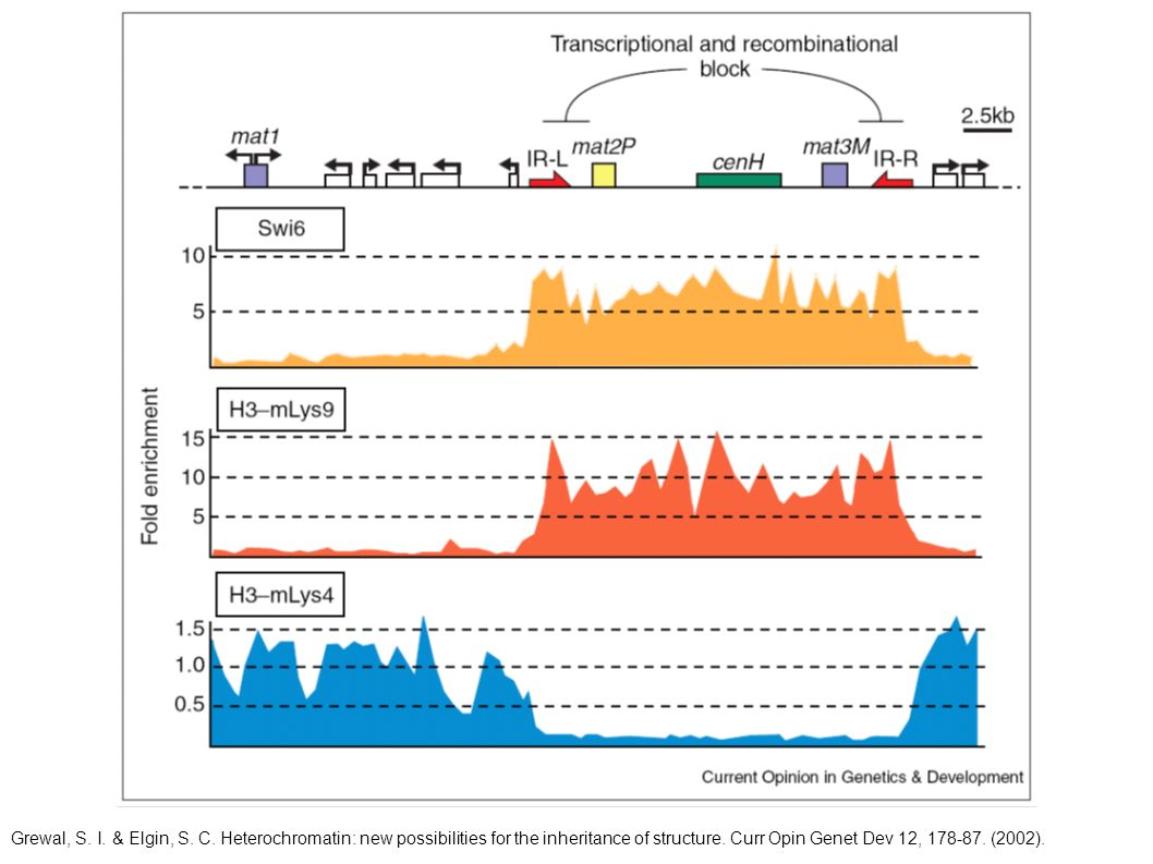 Grewal, S. I. & Elgin, S. C. Heterochromatin: new possibilities for the inheritance of structure. Curr Opin Genet Dev 12, 178-87. (2002).