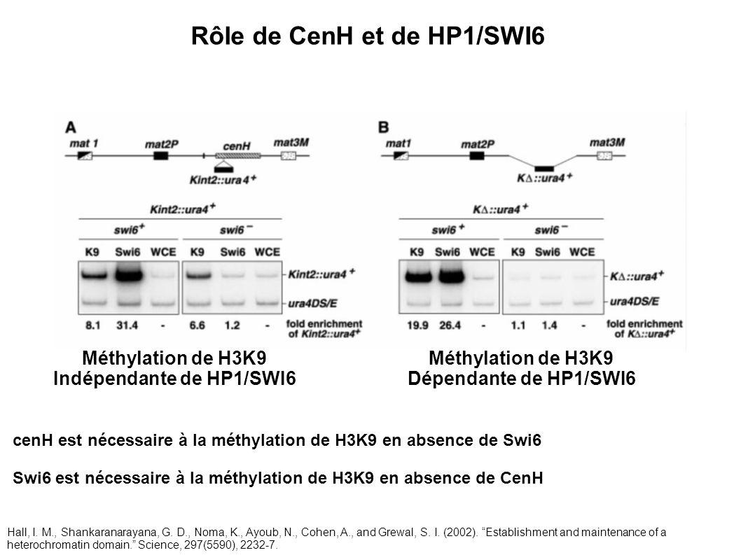 Méthylation de H3K9 Indépendante de HP1/SWI6 Méthylation de H3K9 Dépendante de HP1/SWI6 Rôle de CenH et de HP1/SWI6 cenH est nécessaire à la méthylati
