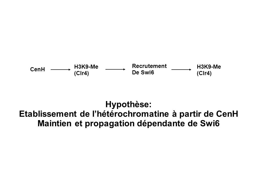 H3K9-Me (Clr4) Recrutement De Swi6 CenH H3K9-Me (Clr4) Hypothèse: Etablissement de lhétérochromatine à partir de CenH Maintien et propagation dépendan
