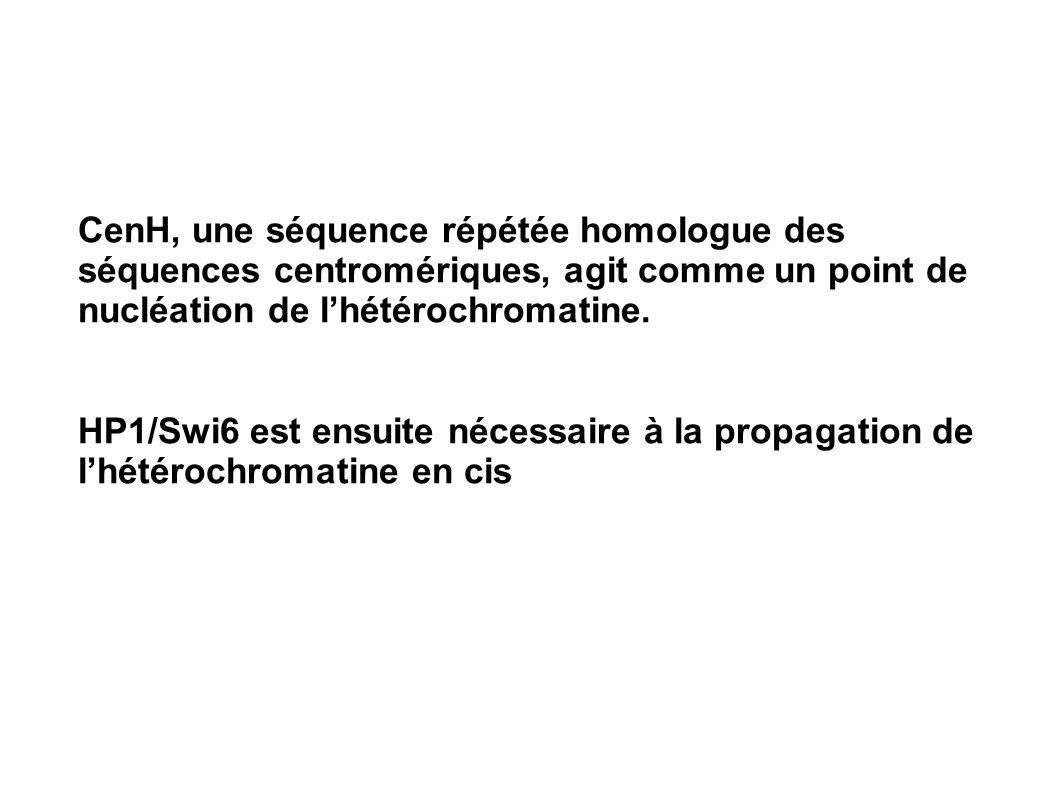 CenH, une séquence répétée homologue des séquences centromériques, agit comme un point de nucléation de lhétérochromatine. HP1/Swi6 est ensuite nécess
