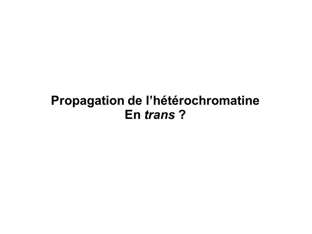 Propagation de lhétérochromatine En trans ?