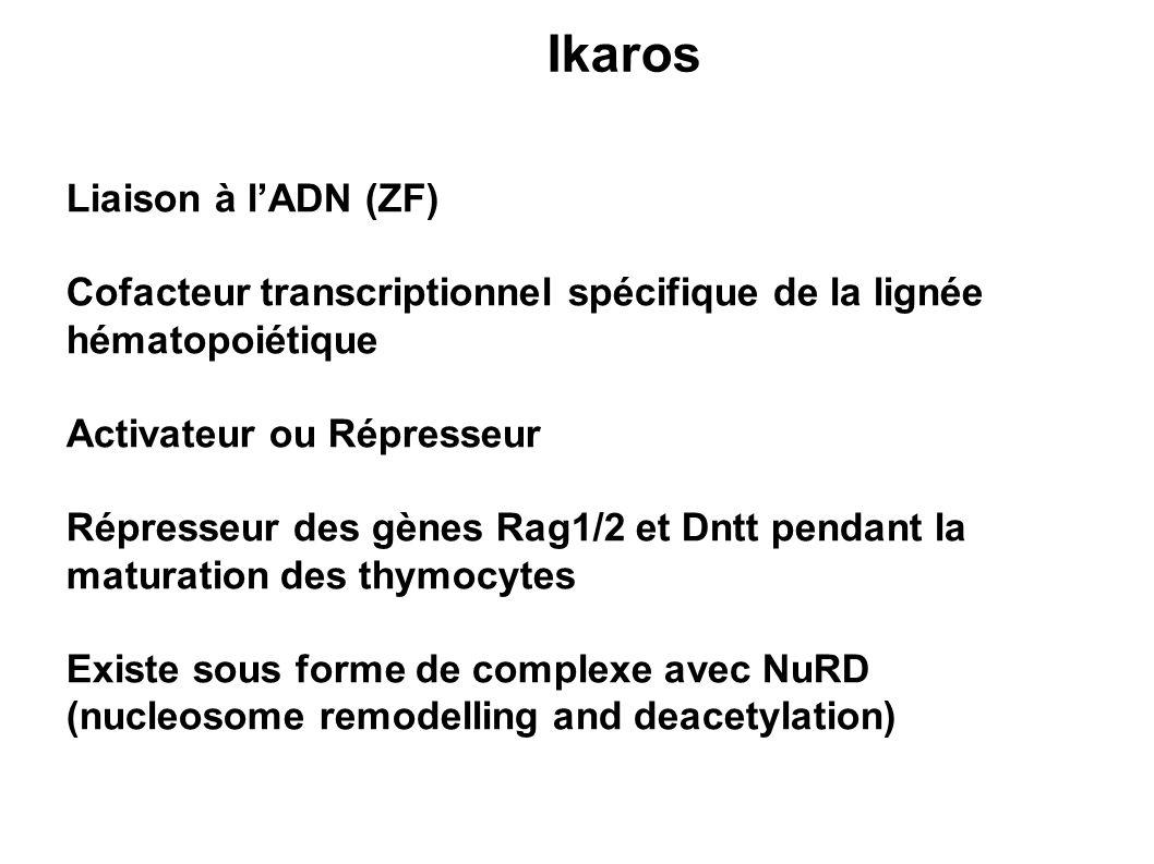 Ikaros Liaison à lADN (ZF) Cofacteur transcriptionnel spécifique de la lignée hématopoiétique Activateur ou Répresseur Répresseur des gènes Rag1/2 et