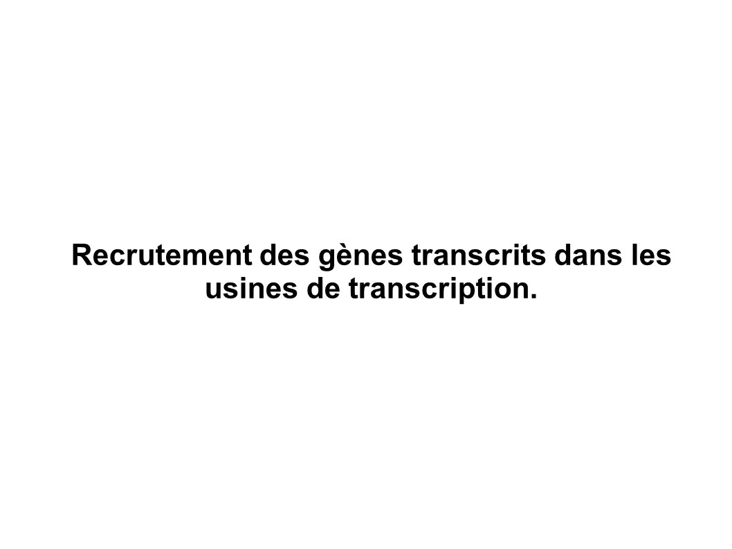 Recrutement des gènes transcrits dans les usines de transcription.