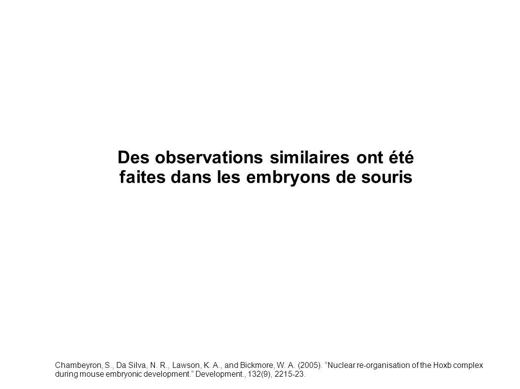 Des observations similaires ont été faites dans les embryons de souris Chambeyron, S., Da Silva, N. R., Lawson, K. A., and Bickmore, W. A. (2005). Nuc