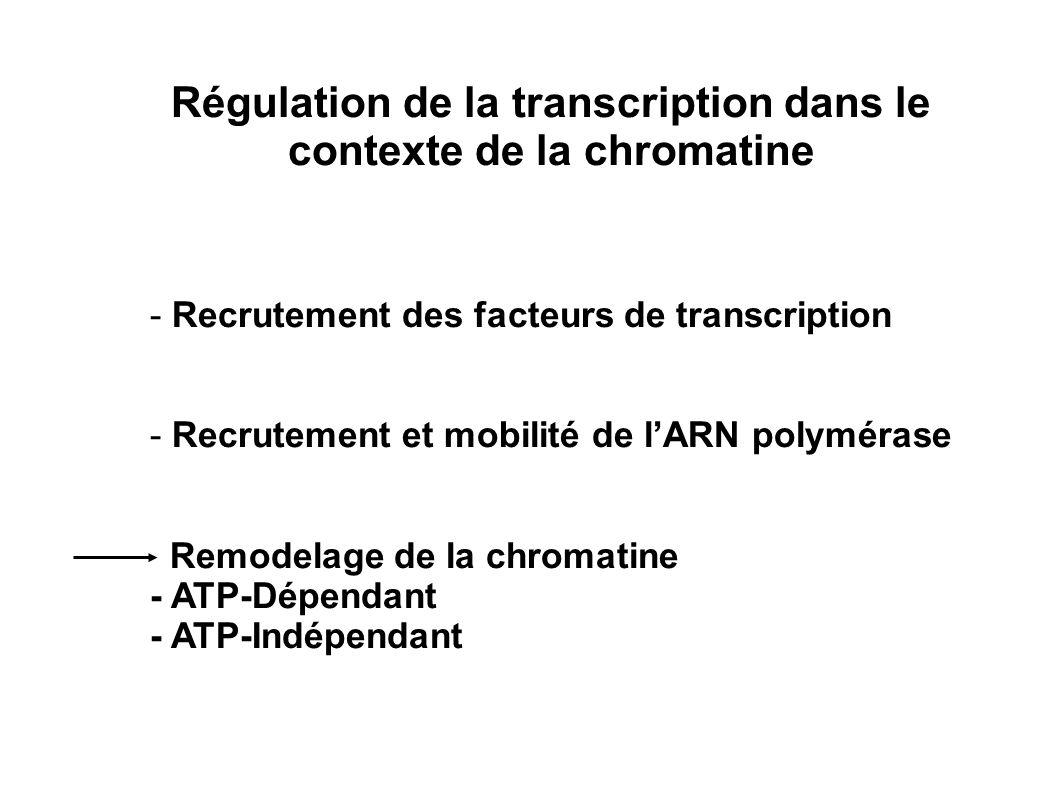 ATP-Dependant Transitoire Local (promoteurs) Non diffusible Non transmissible ATP-Independant Stable Diffusible à léchelle dun locus Transmissible (épigénétique) Mécanismes de remodelage de la chromatine