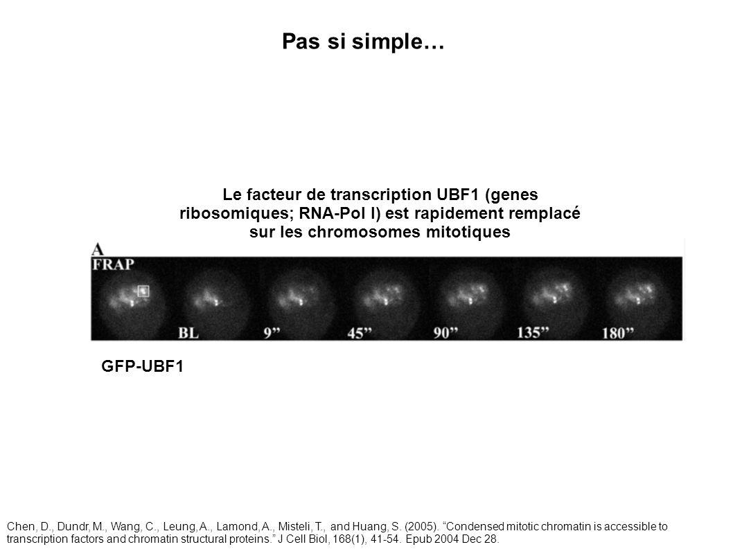 Le facteur de transcription UBF1 (genes ribosomiques; RNA-Pol I) est rapidement remplacé sur les chromosomes mitotiques GFP-UBF1 Pas si simple… Chen,
