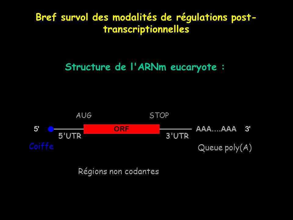 Bref survol des modalités de régulations post- transcriptionnelles ORF AAA….AAA5'3' AUGSTOP 5'UTR3'UTR Structure de l'ARNm eucaryote : Coiffe Queue po