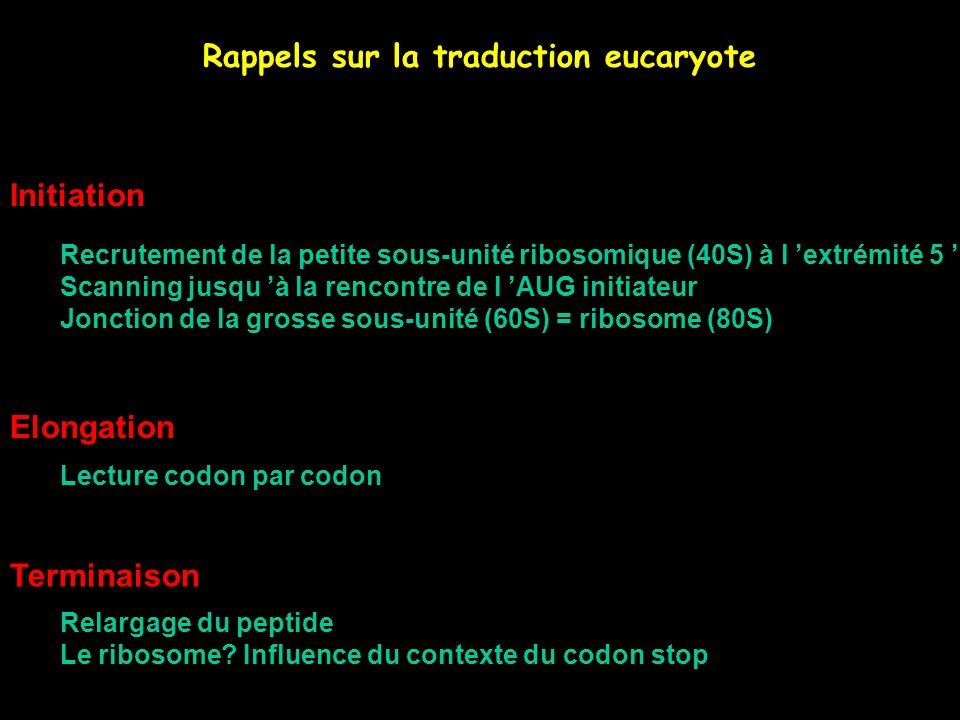 Rappels sur la traduction eucaryote Initiation Recrutement de la petite sous-unité ribosomique (40S) à l extrémité 5 Scanning jusqu à la rencontre de