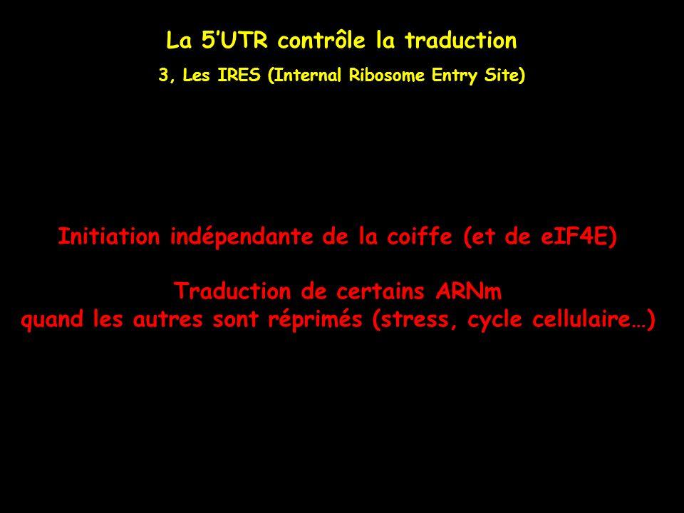 La 5UTR contrôle la traduction 3, Les IRES (Internal Ribosome Entry Site) Initiation indépendante de la coiffe (et de eIF4E) Traduction de certains AR