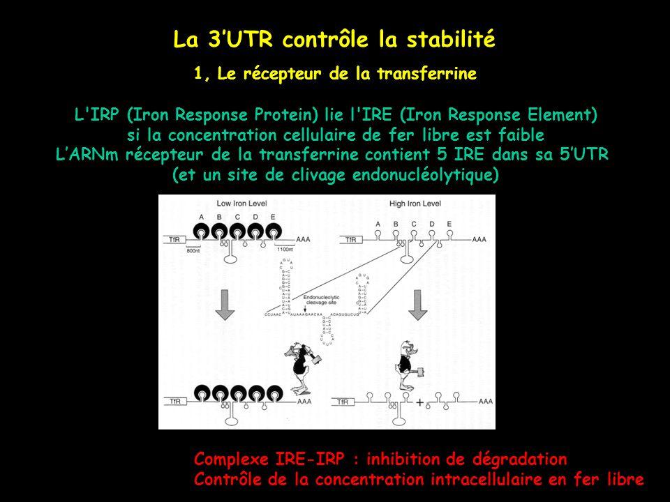 La 3UTR contrôle la stabilité 1, Le récepteur de la transferrine L'IRP (Iron Response Protein) lie l'IRE (Iron Response Element) si la concentration c