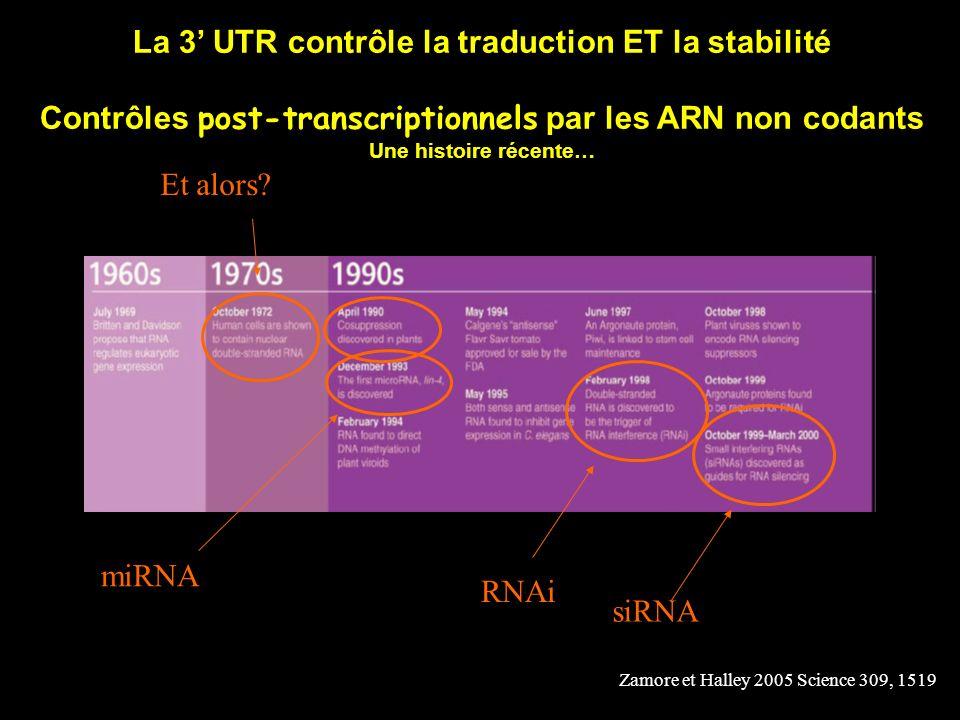 La 3 UTR contrôle la traduction ET la stabilité Contrôles post-transcriptionnels par les ARN non codants Une histoire récente… Zamore et Halley 2005 S