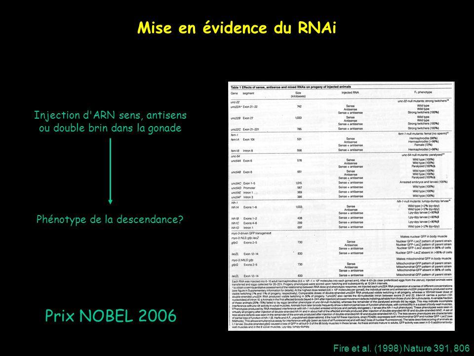 Mise en évidence du RNAi Injection d'ARN sens, antisens ou double brin dans la gonade Phénotype de la descendance? Fire et al. (1998) Nature 391, 806