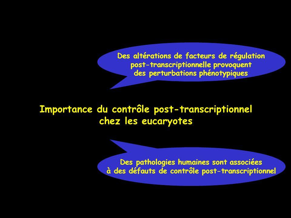 Importance du contrôle post-transcriptionnel chez les eucaryotes Des pathologies humaines sont associées à des défauts de contrôle post-transcriptionn