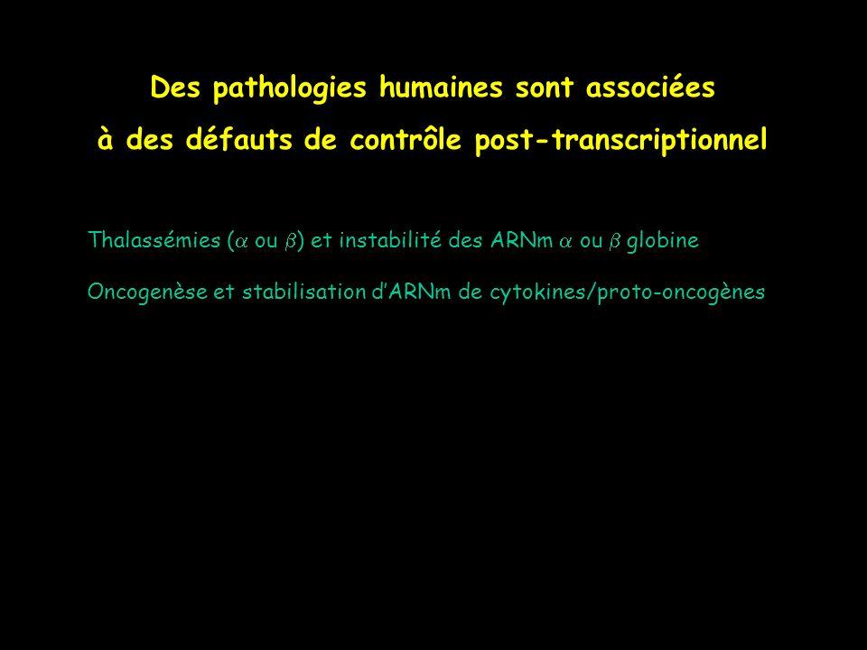 Des pathologies humaines sont associées à des défauts de contrôle post-transcriptionnel Thalassémies ( ou ) et instabilité des ARNm ou globine Oncogen
