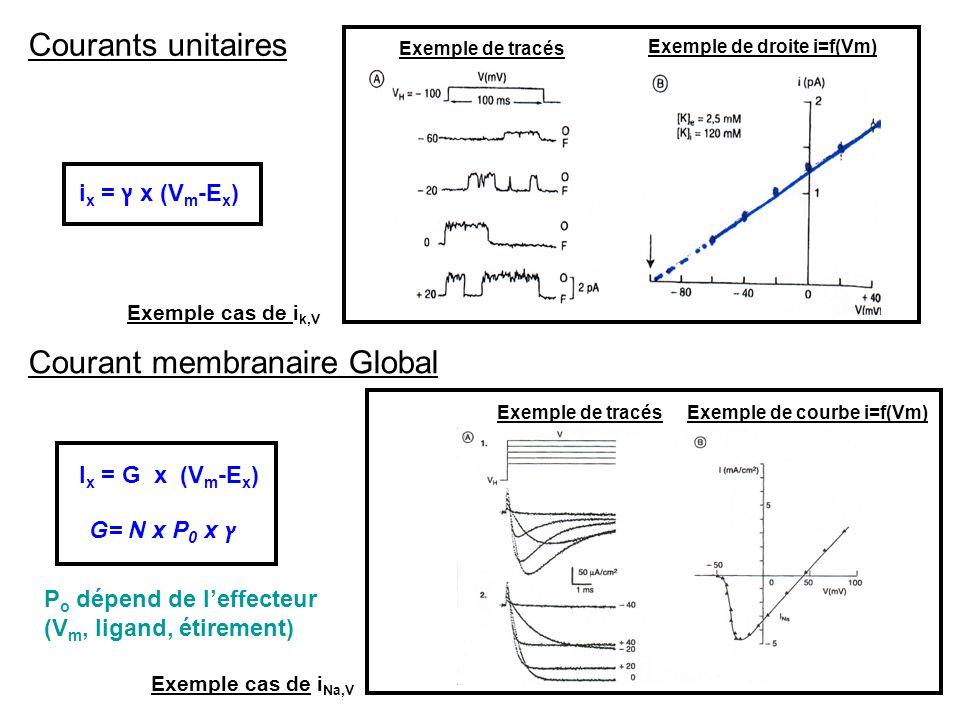 Courants unitaires Courant membranaire Global i x = ץ x (V m -E x ) I x = G x (V m -E x ) G= N x P 0 x ץ Exemple de tracés Exemple de droite i=f(Vm) E