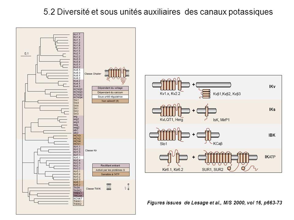 Figures issues de Lesage et al., M/S 2000, vol 16, p663-73 5.2 Diversité et sous unités auxiliaires des canaux potassiques