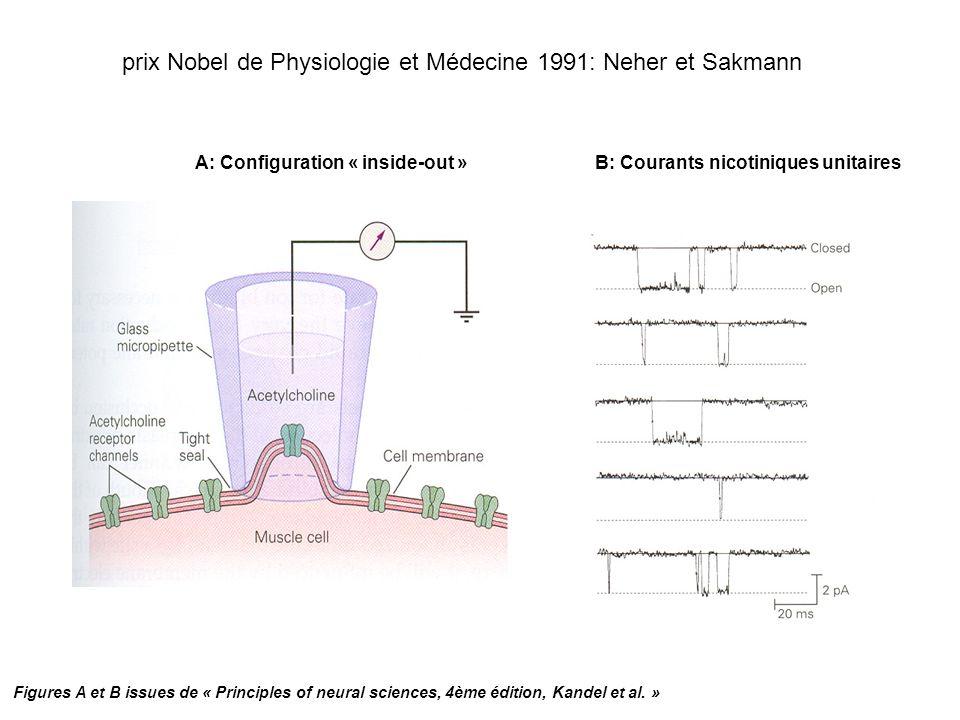 A: Configuration « inside-out »B: Courants nicotiniques unitaires prix Nobel de Physiologie et Médecine 1991: Neher et Sakmann Figures A et B issues d