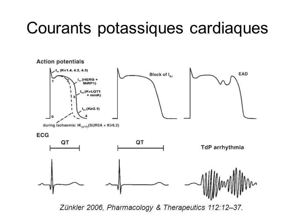 Courants potassiques cardiaques Zünkler 2006, Pharmacology & Therapeutics 112:12–37.