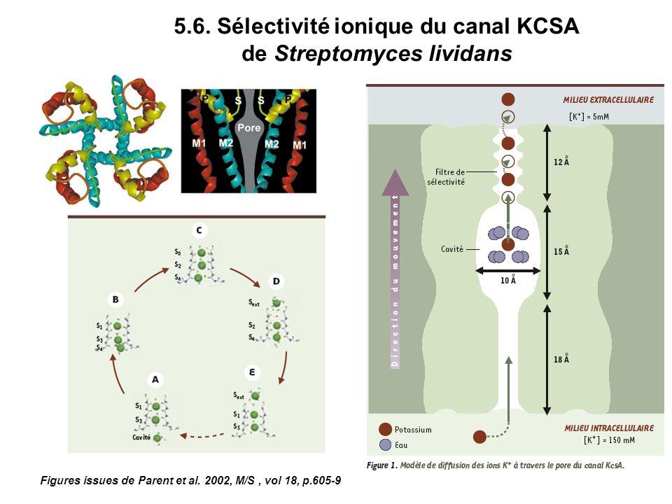 5.6. Sélectivité ionique du canal KCSA de Streptomyces lividans Figures issues de Parent et al. 2002, M/S, vol 18, p.605-9