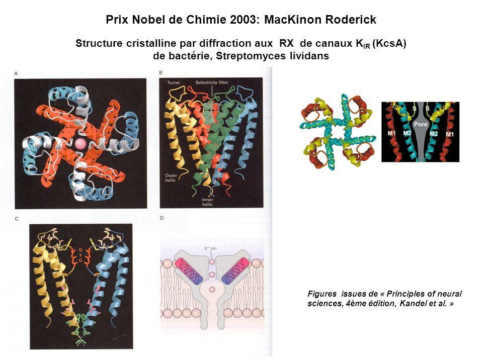 Structure cristalline par diffraction aux RX de canaux K IR (KcsA) de bactérie, Streptomyces lividans Prix Nobel de Chimie 2003: MacKinon Roderick Fig