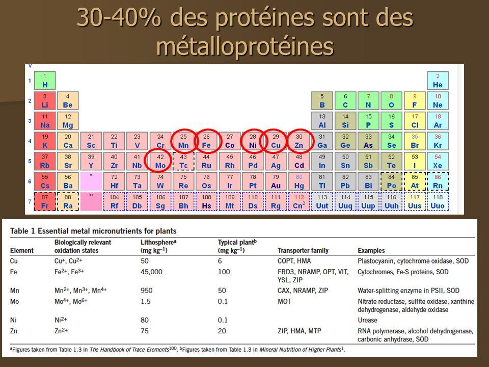 30-40% des protéines sont des métalloprotéines