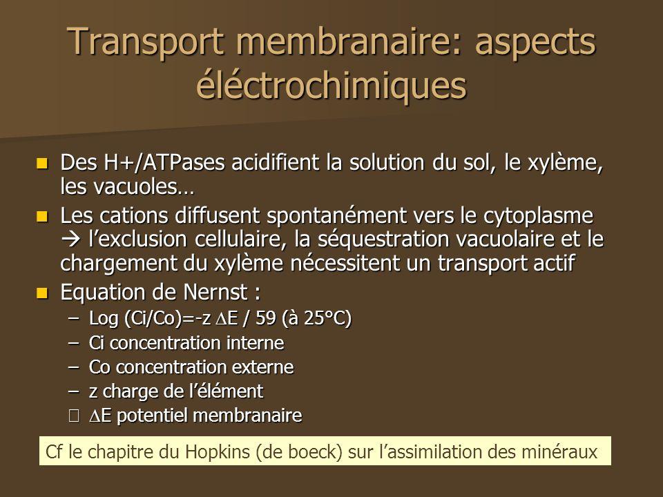 Transport membranaire: aspects éléctrochimiques Des H+/ATPases acidifient la solution du sol, le xylème, les vacuoles… Des H+/ATPases acidifient la solution du sol, le xylème, les vacuoles… Les cations diffusent spontanément vers le cytoplasme lexclusion cellulaire, la séquestration vacuolaire et le chargement du xylème nécessitent un transport actif Les cations diffusent spontanément vers le cytoplasme lexclusion cellulaire, la séquestration vacuolaire et le chargement du xylème nécessitent un transport actif Equation de Nernst : Equation de Nernst : –Log (Ci/Co)=-z E / 59 (à 25°C) –Ci concentration interne –Co concentration externe –z charge de lélément – E potentiel membranaire Cf le chapitre du Hopkins (de boeck) sur lassimilation des minéraux
