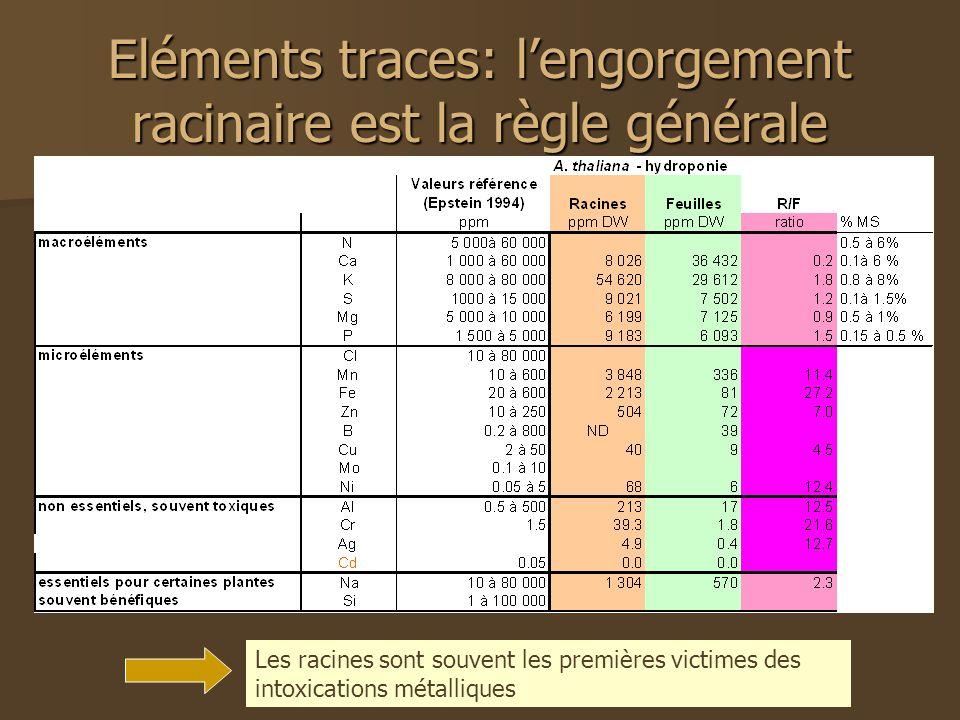 Eléments traces: lengorgement racinaire est la règle générale Les racines sont souvent les premières victimes des intoxications métalliques