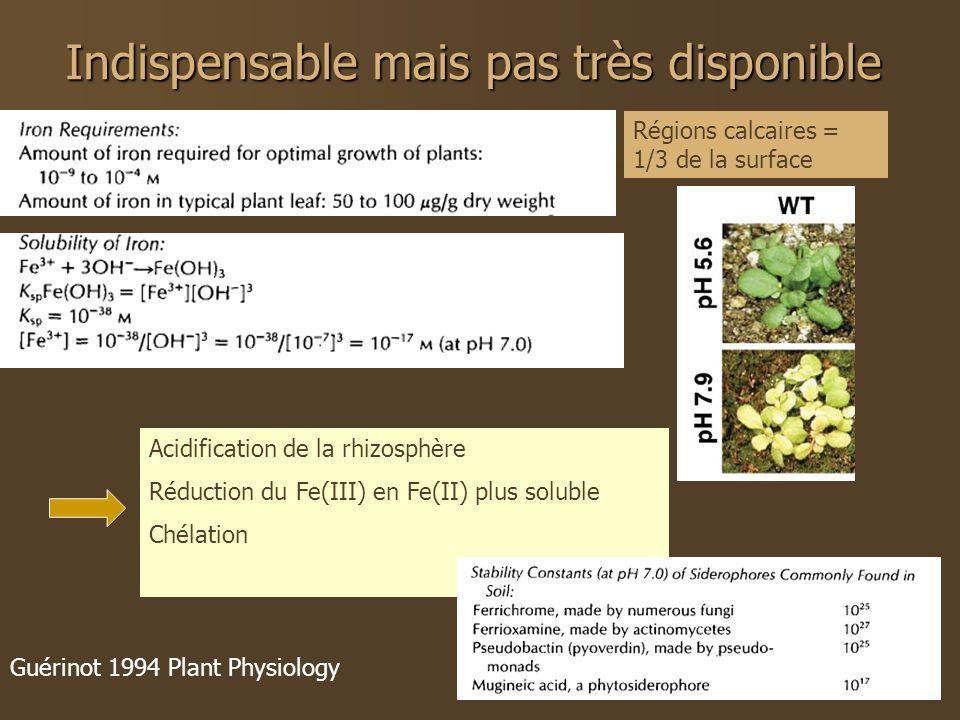 Indispensable mais pas très disponible Guérinot 1994 Plant Physiology Régions calcaires = 1/3 de la surface Acidification de la rhizosphère Réduction du Fe(III) en Fe(II) plus soluble Chélation