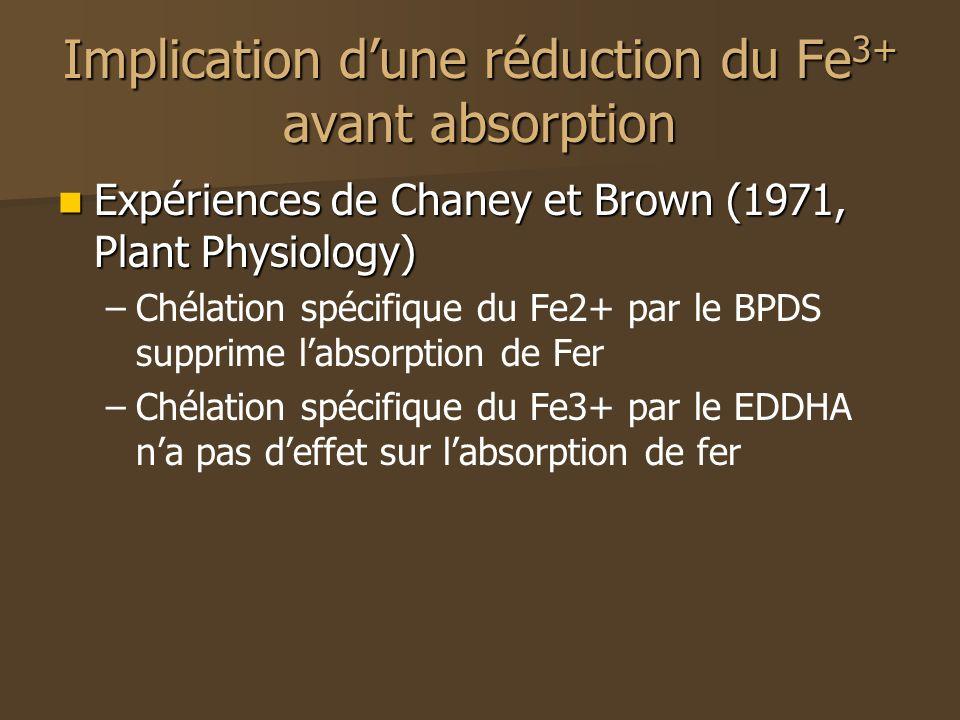Implication dune réduction du Fe 3+ avant absorption Expériences de Chaney et Brown (1971, Plant Physiology) Expériences de Chaney et Brown (1971, Plant Physiology) – –Chélation spécifique du Fe2+ par le BPDS supprime labsorption de Fer – –Chélation spécifique du Fe3+ par le EDDHA na pas deffet sur labsorption de fer