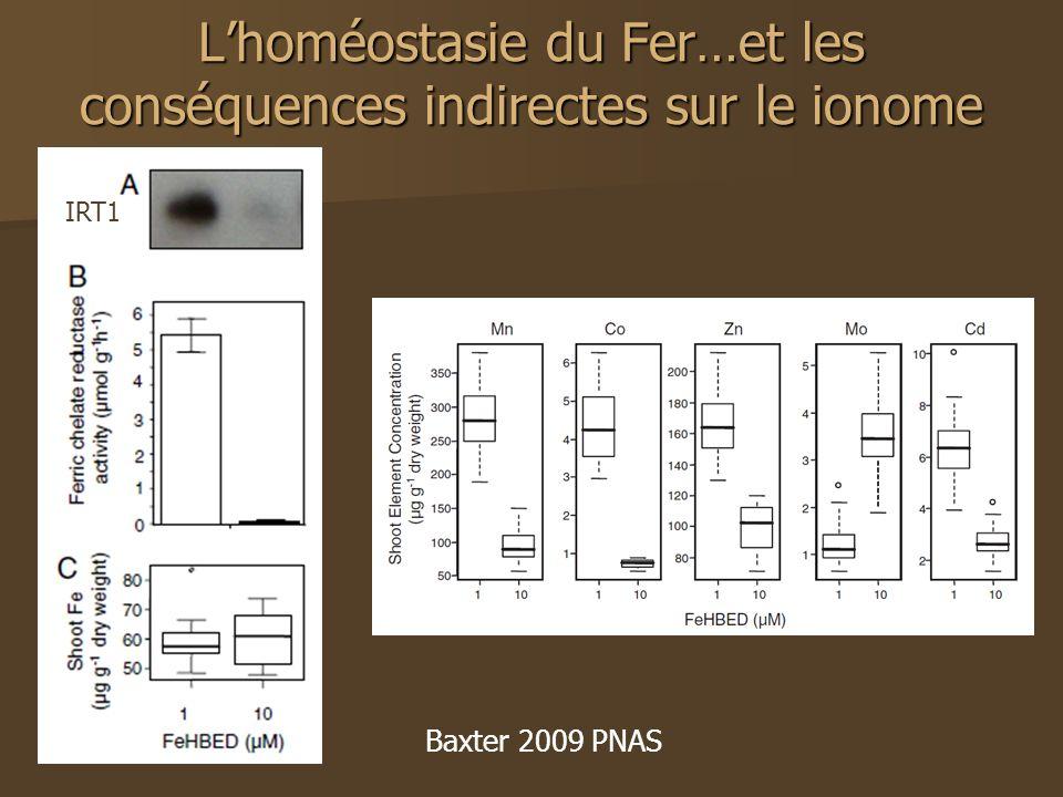 Lhoméostasie du Fer…et les conséquences indirectes sur le ionome IRT1 Baxter 2009 PNAS