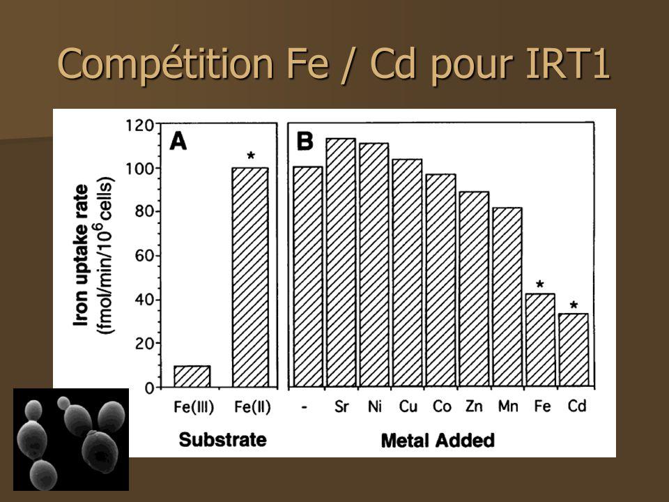 Compétition Fe / Cd pour IRT1