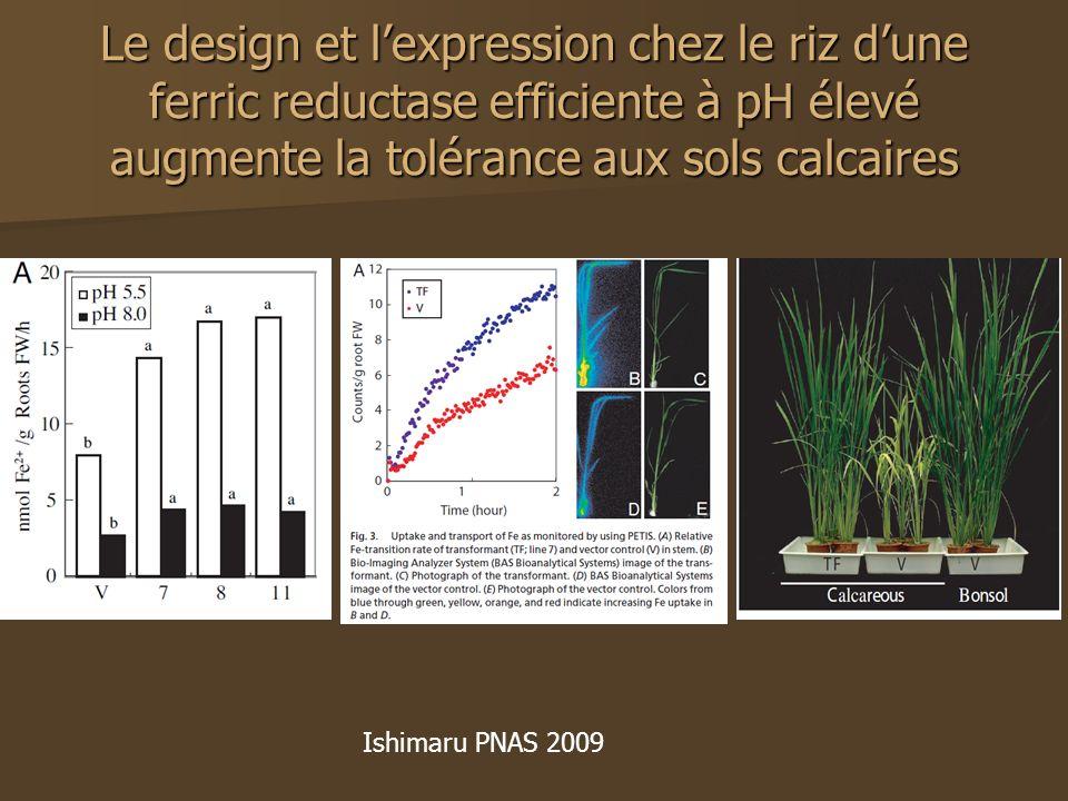 Le design et lexpression chez le riz dune ferric reductase efficiente à pH élevé augmente la tolérance aux sols calcaires Ishimaru PNAS 2009