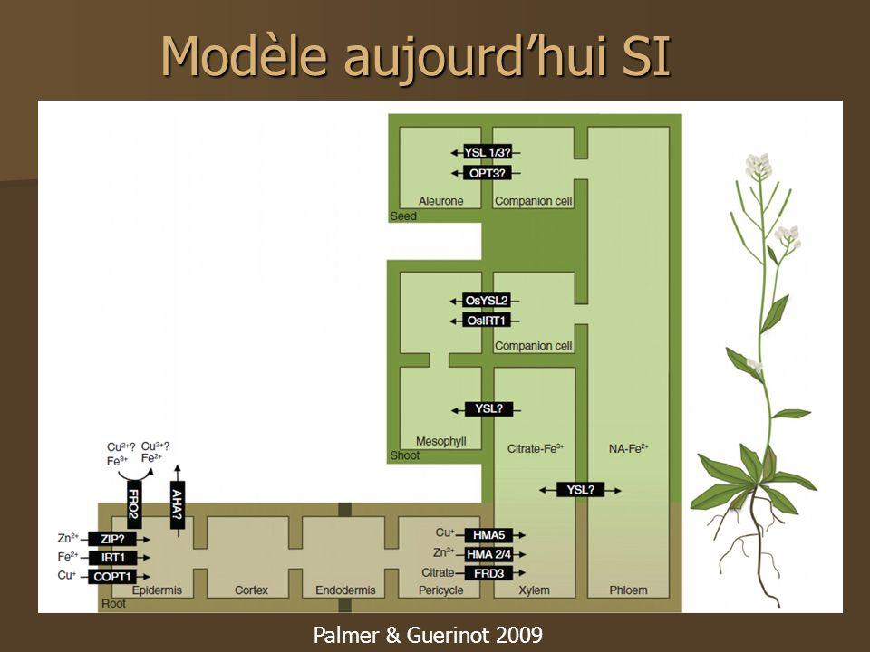 Modèle aujourdhui SI Palmer & Guerinot 2009