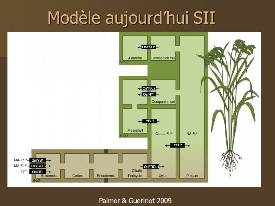Modèle aujourdhui SII Palmer & Guerinot 2009