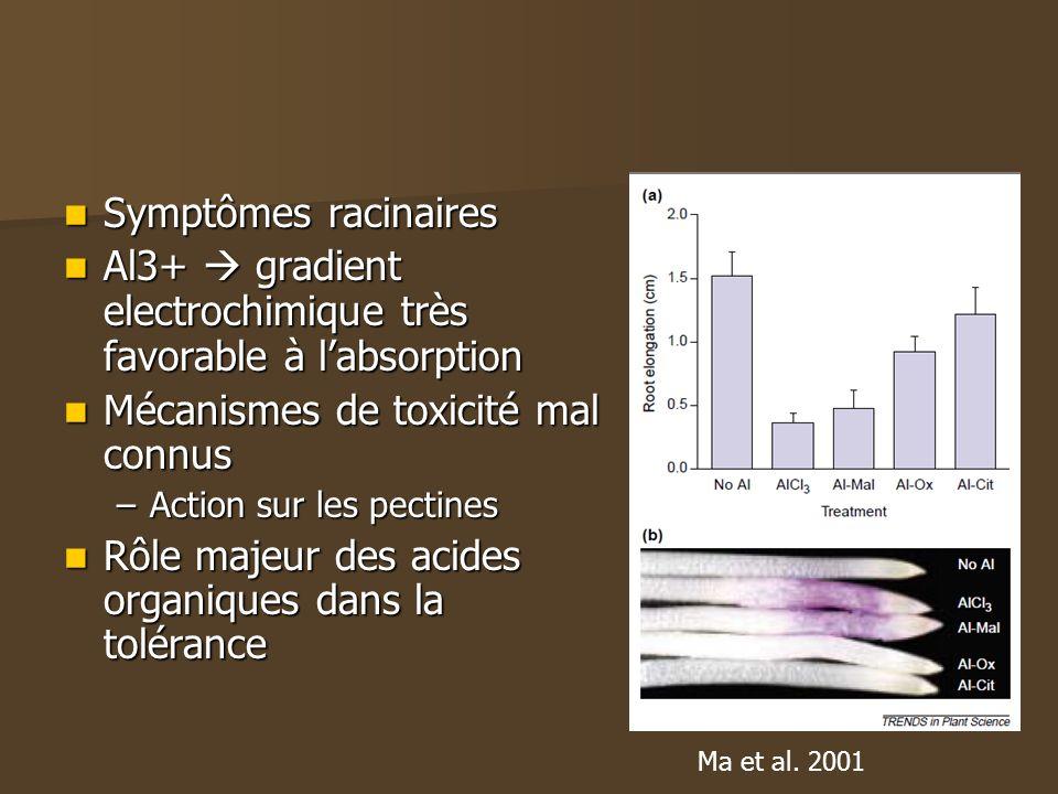 Symptômes racinaires Symptômes racinaires Al3+ gradient electrochimique très favorable à labsorption Al3+ gradient electrochimique très favorable à la