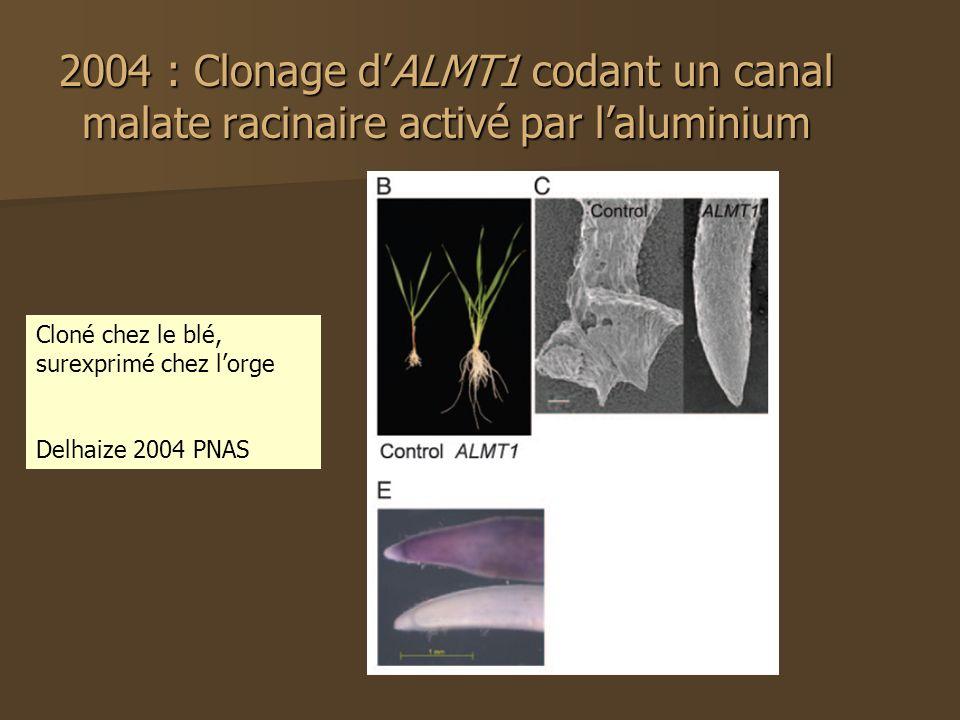 2004 : Clonage dALMT1 codant un canal malate racinaire activé par laluminium Cloné chez le blé, surexprimé chez lorge Delhaize 2004 PNAS