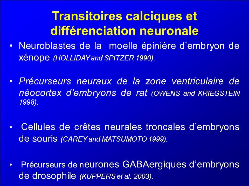 Transitoires calciques et différenciation neuronale Neuroblastes de la moelle épinière dembryon de xénope (HOLLIDAY and SPITZER 1990). Précurseurs neu
