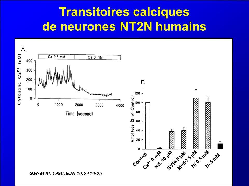 Transitoires calciques de neurones NT2N humains A B Gao et al. 1998, EJN 10:2416-25 Control Ca 2+ 0 mM Nif. 10 µM GVIA 5 µMMVIIC 5 µM Ni 0.5 mM Ni 5 m