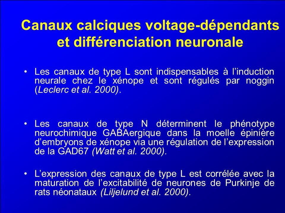 Canaux calciques voltage-dépendants et différenciation neuronale Les canaux de type L sont indispensables à linduction neurale chez le xénope et sont