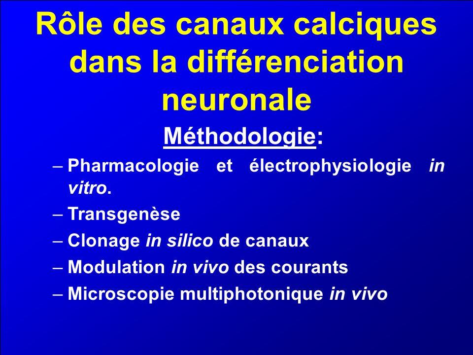 Rôle des canaux calciques dans la différenciation neuronale Méthodologie: –Pharmacologie et électrophysiologie in vitro. –Transgenèse –Clonage in sili