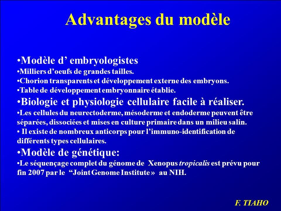 Advantages du modèle Modèle d embryologistes Milliers doeufs de grandes tailles. Chorion transparents et développement externe des embryons. Table de