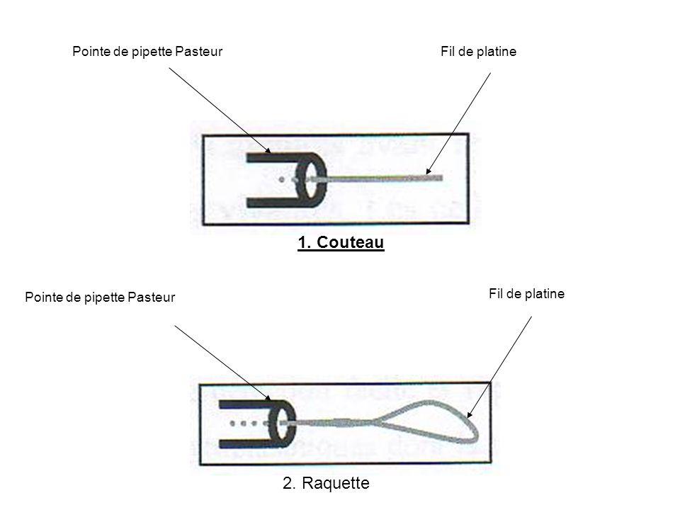 Fil de platine Pointe de pipette Pasteur 1. Couteau 2. Raquette
