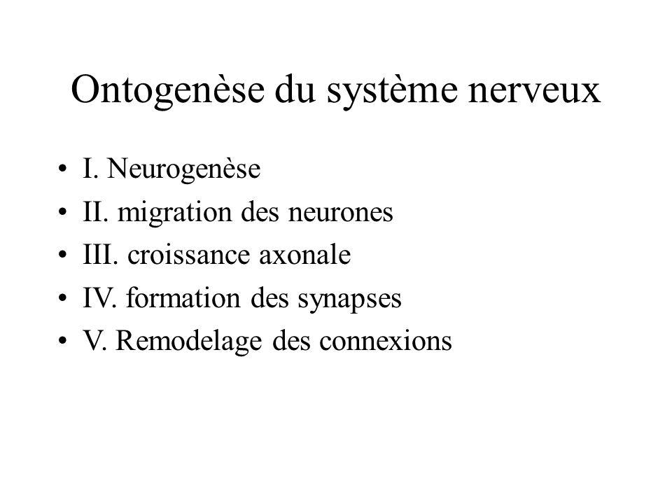 Ontogenèse du système nerveux I.Neurogenèse II. migration des neurones III.