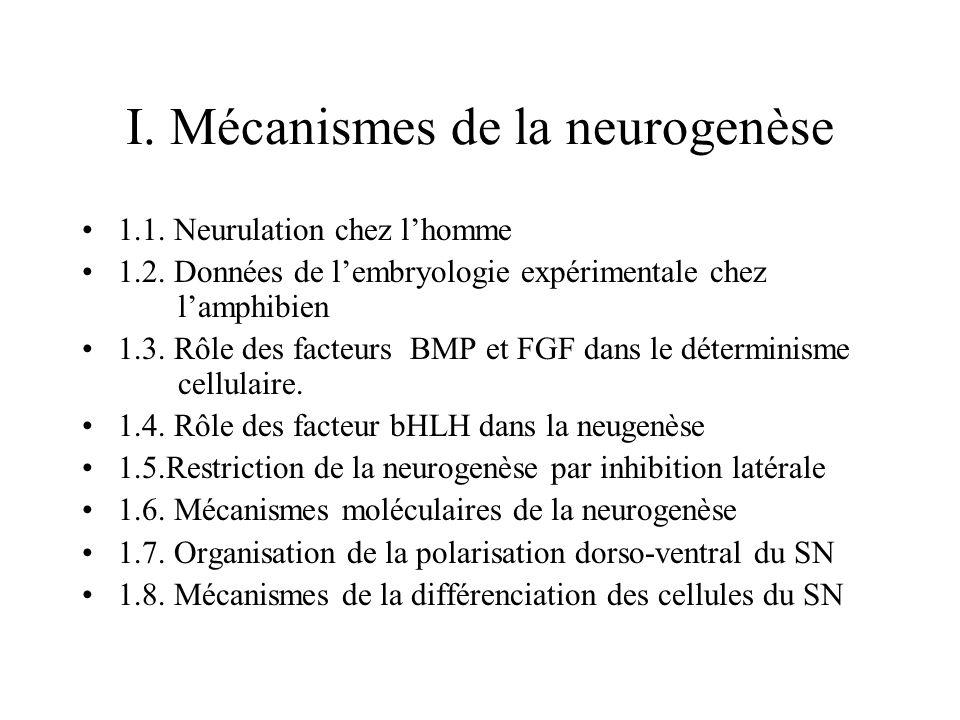 I.Mécanismes de la neurogenèse 1.1. Neurulation chez lhomme 1.2.
