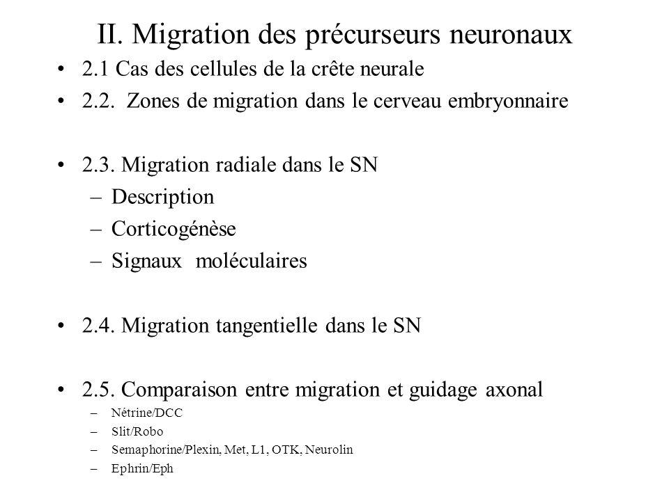 II.Migration des précurseurs neuronaux 2.1 Cas des cellules de la crête neurale 2.2.