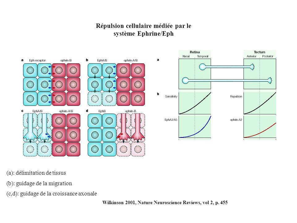 Wilkinson 2001, Nature Neuroscience Reviews, vol 2, p.