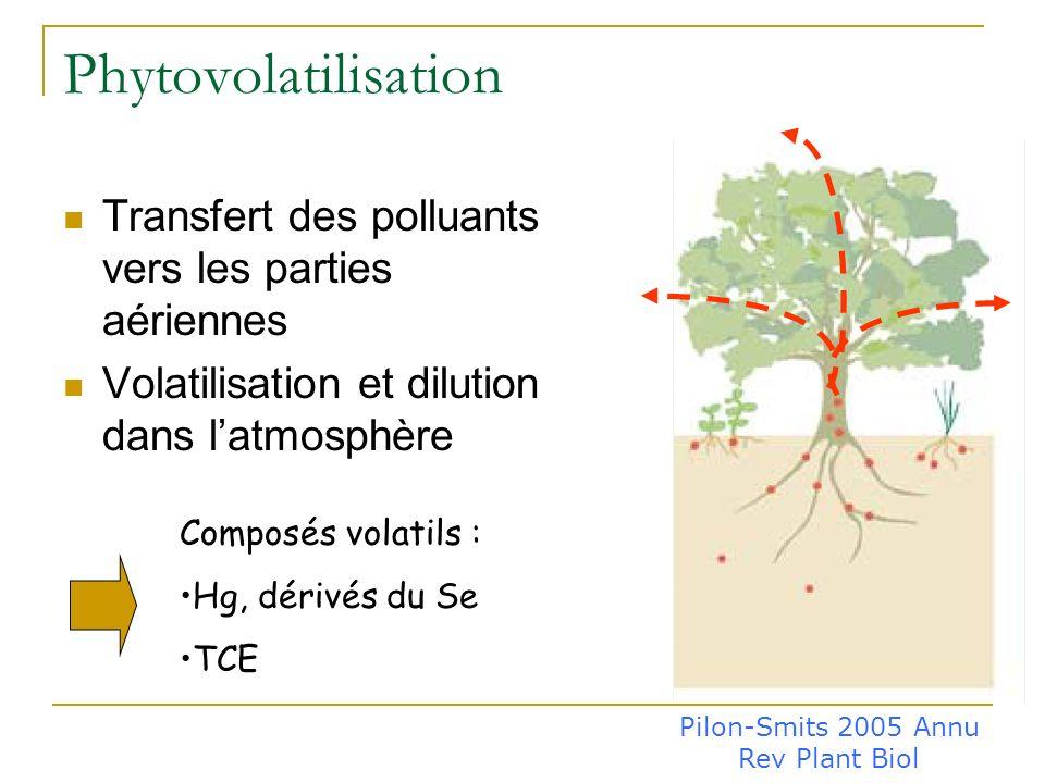 Phytoextraction Transfert des polluants vers les parties aériennes: Niveau de bioaccumulation ? Niveau de translocation ? Récolte Confinement ou recyc