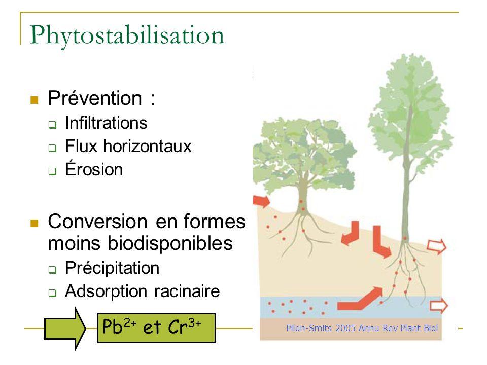 Phytovolatilisation Pilon-Smits 2005 Annu Rev Plant Biol Transfert des polluants vers les parties aériennes Volatilisation et dilution dans latmosphèr