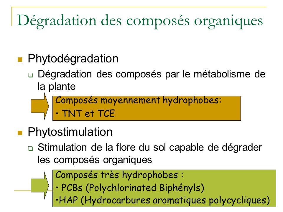 Typologie des techniques Dégradation des polluants organiques Phytodégradation Rhizostimulation ou Phytostimulation