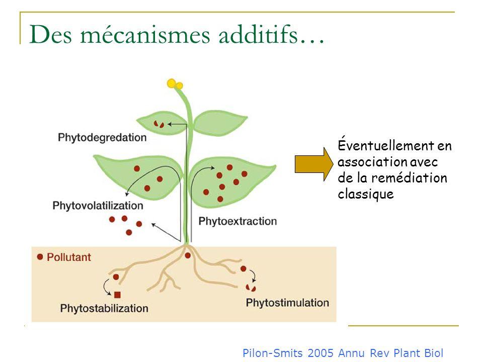 Plante = végétal + microorganismes associés 10-20% des photosynthétats exsudats racinaires Densité microbienne augmentée de plusieurs ordres de grande